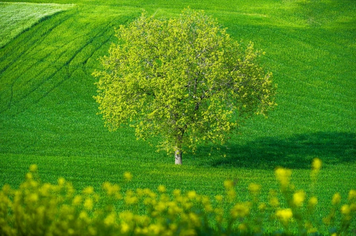 fotografia e paesaggi, albero