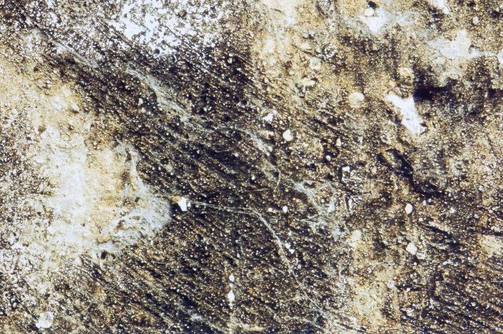 Forme di Memoria, particolare di parete con ragnatele