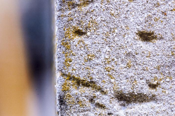 Forme di Memoria, particolare di parete con muschio